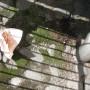 17_Joku toinen oli heittänyt sinne hampurilaispaperin